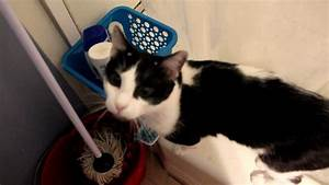 Rescue cat soulpatch opens the bathroom door youtube for Cat bathroom door