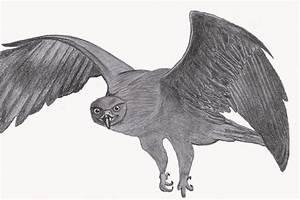 Flying Falcon by Catla on DeviantArt