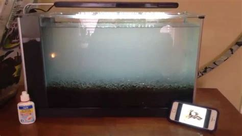Aquascaping For Beginners by Aquascaping For Beginners Type Of Tank And Substrate
