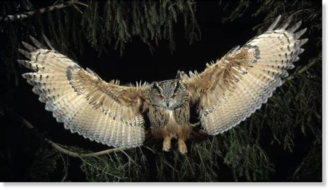 man attacked  owl  salem oregon earth