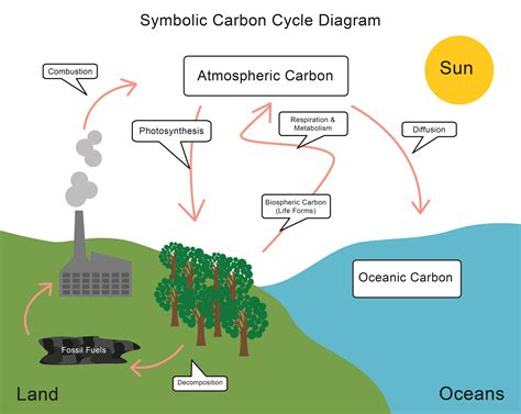 Energy Transfer And The Carbon Cycle Worksheet Edplace