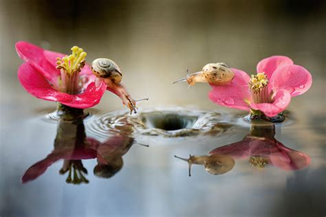 close   nature photography
