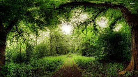 path   green forest wallpaper nature