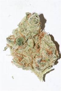 essays on why marijuana is bad essays on why marijuana is bad essays on why marijuana is bad
