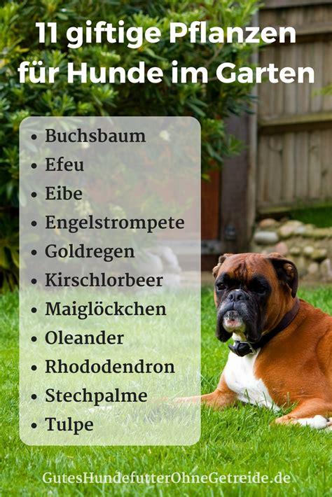 Hund Hat Pilz Im Garten Gefressen by 11 Giftige Pflanzen F 252 R Hunde Im Garten Giftigf 252 Rhunde