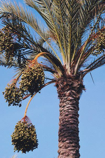 Is Palm Fruit Oil Bad For The Heart? Livestrongcom