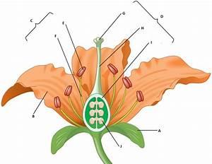 Diagram Quiz On Flower Parts