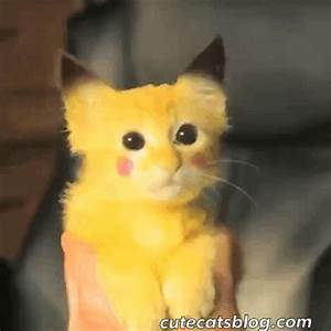 Cute Cats GIF - Find & Share on GIPHY