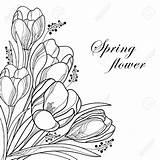 Corner Flower Drawing Crocus Outline Floral Flowers Coloring Spring Bouquet Vector Elements Getdrawings sketch template