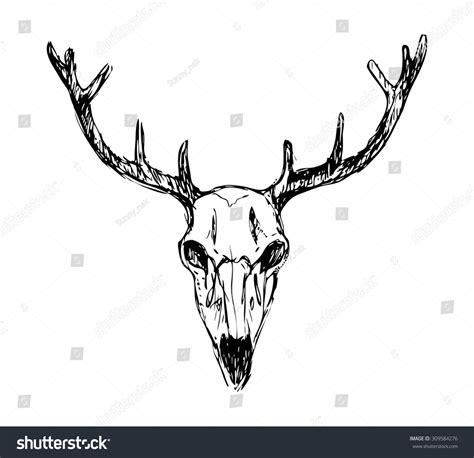 Vector Deer Skull Stock Shutterstock