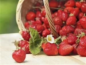 Erdbeeren Pflanzen Die Wichtigsten Tipps : erdbeeren pflanzen mit profi tipps ~ Lizthompson.info Haus und Dekorationen