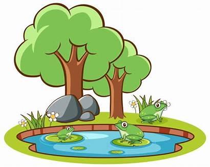 Pond Scene Isolated Ranas Cartoon Estanque Stagno