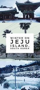 "The Jeju Island Winter That Shut Down the ""Hawaii of Korea ..."