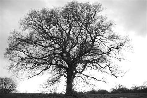 Tree Of Images сюрреалистичный постер в стиле 183 171 мир фотошопа 187