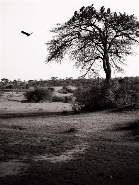 photo bébé noir et blanc photographie noir et blanc paysage 187 vacances arts