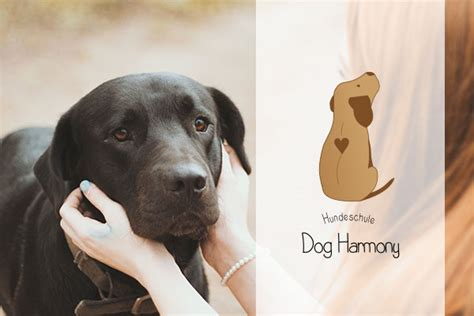 verhaltenstherapie hundeschule dog harmony