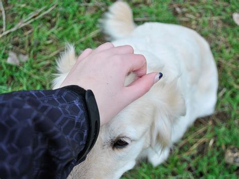 how to teach your to play dead how to teach your dog to play dead on command 8 steps