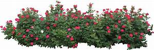 Hedges clipart flower bush - Pencil and in color hedges ...