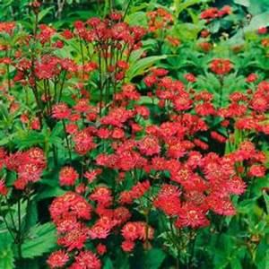 Schattenpflanzen Garten Winterhart : stauden von g rtner p tschke ~ Lizthompson.info Haus und Dekorationen