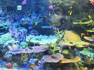 Beautiful Colorful Coral Reef