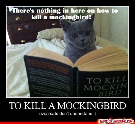 To Kill A Mockingbird Cat Meme - how to kill a mockingbird makes me laugh pinterest