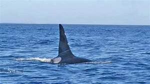 Orca Spotted Off The Coast Of Cape Cod Video