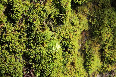 image libre texture feuille nature mousse bois flore