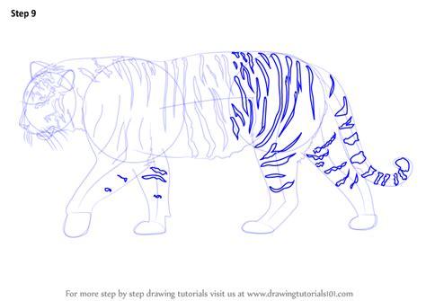 step  step   draw  siberian tiger