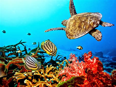 Sea Turtle Hd Wallpapers Earth Blog