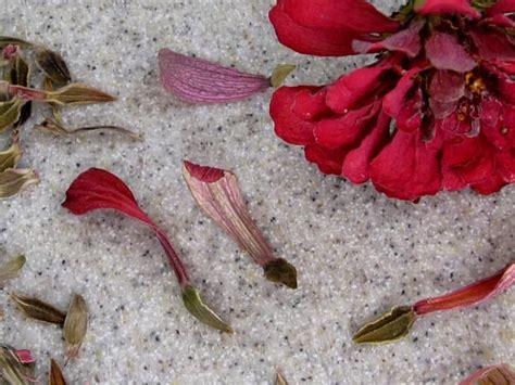how to save zinnia seeds saving seed