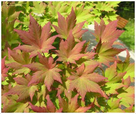 Alter Botanischer Garten In München by Itaya Meigetsu 27640 Japanese R Maji Common Name