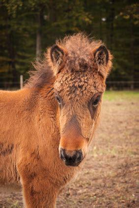 Fellwechsel Unterstützen Pferd