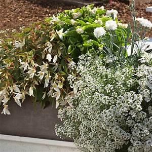 Balkon Gestaltungsideen Pflanzen : pflanzen f r den balkon in wei ~ Lizthompson.info Haus und Dekorationen