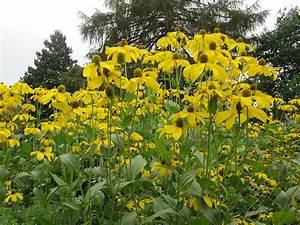 Welche Erde Für Hortensien : welche pflanzen gedeihen auf saurem boden welche pflanzen f r sandige b den pflanzen f r einen ~ Eleganceandgraceweddings.com Haus und Dekorationen