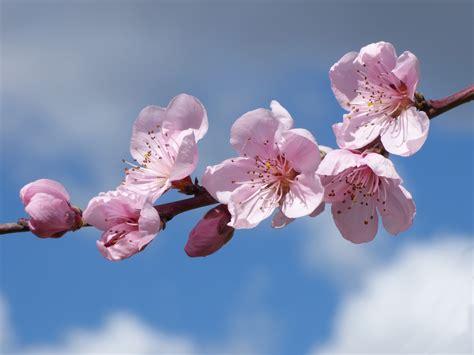 Free Images : flower petal food spring produce pink