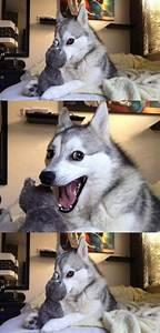 Pun Dog Meme Husky Blank