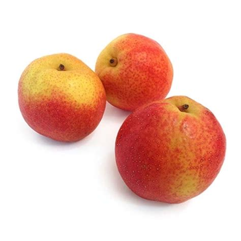 papple fruit papple pears