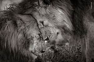 LUMIX presents Wildlife Photographer of the Year Award