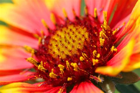 Fond D écran Fleur Scenery Wallpaper Fond D 233 Cran Gratuit De Fleurs