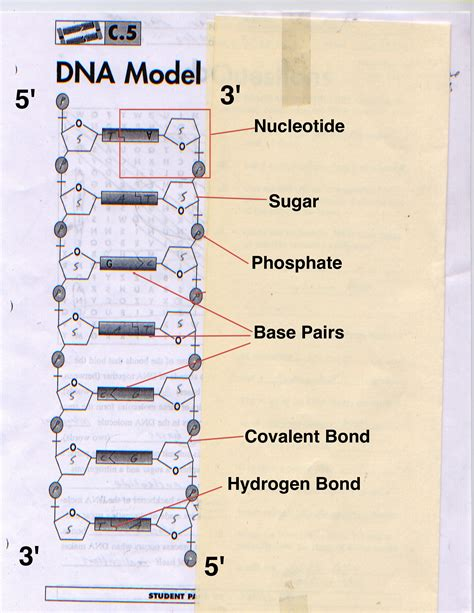 dna labeled sugar www pixshark com images galleries