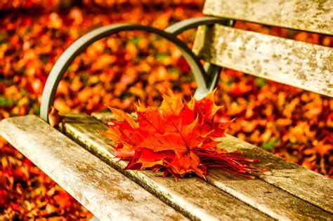 bench tree autumn fall landscape nature tree forest leaf leaves bench