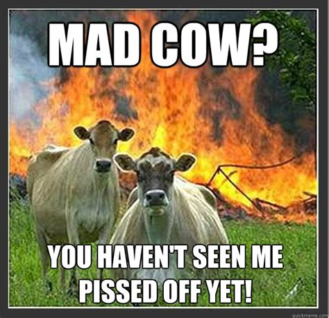 Pissed Off Memes - mad cow you haven t seen me pissed off yet evil cows quickmeme