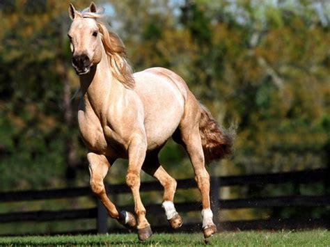 land animals fastest animal horse horses cn china cheval quarter running mph average speed most rare