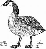 Walking Goose Geese Canadian Craft Coloring Numbers sketch template