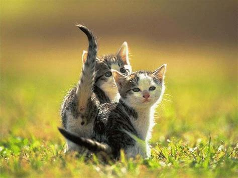 Funny And Cute Animals 26 High Resolution Wallpaper