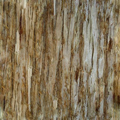 tree bark texture 187 bark 004 kirk dunne blog