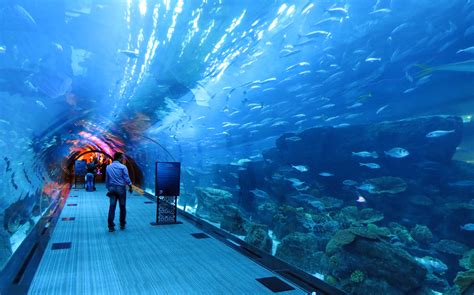 top 7 new largest aquarium in the world morewallpapers