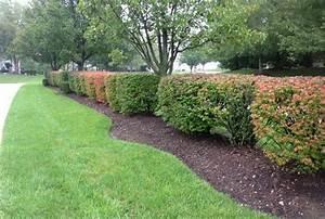 Haie Naturelle Brise Vue : arbuste persistant dans le jardin photos et inspiration ~ Premium-room.com Idées de Décoration