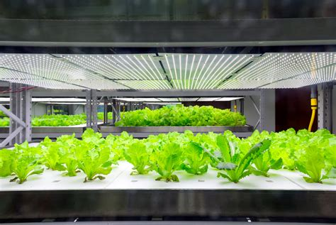 cfl grow light reviews for indoor hydroponics and indoor
