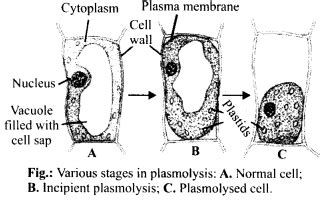 ncert solutions  class  biology transport  plants